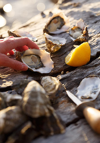 More-oysters_Web.jpg